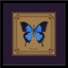 Бабочка Papilio Ulysses (коллекция бабочек)