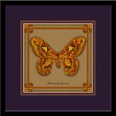 БабочкаRothschildia Jacobaea (коллекция бабочек)