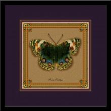 Бабочка Precis Orithya (коллекция бабочек)