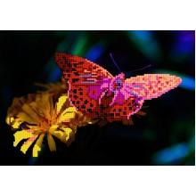 Бабочка - Arginnis Pandora